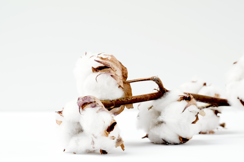 Voor- en nadelen van het dragen van katoen